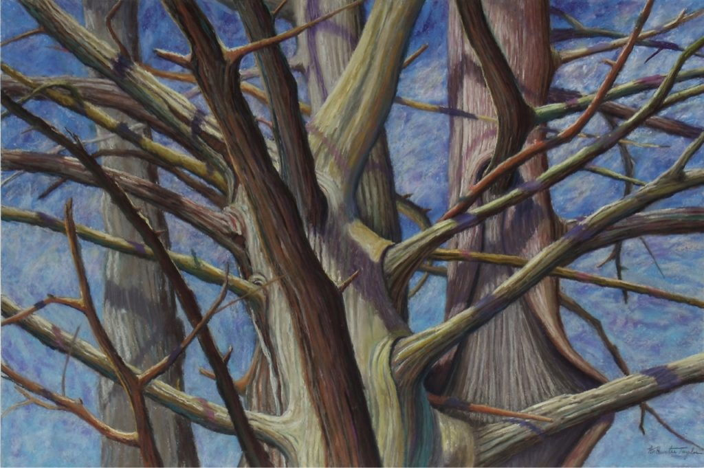 Cedar Abstractions by A. Hunter Taylor, pastel, 24 x 36 at Craven Allen Gallery