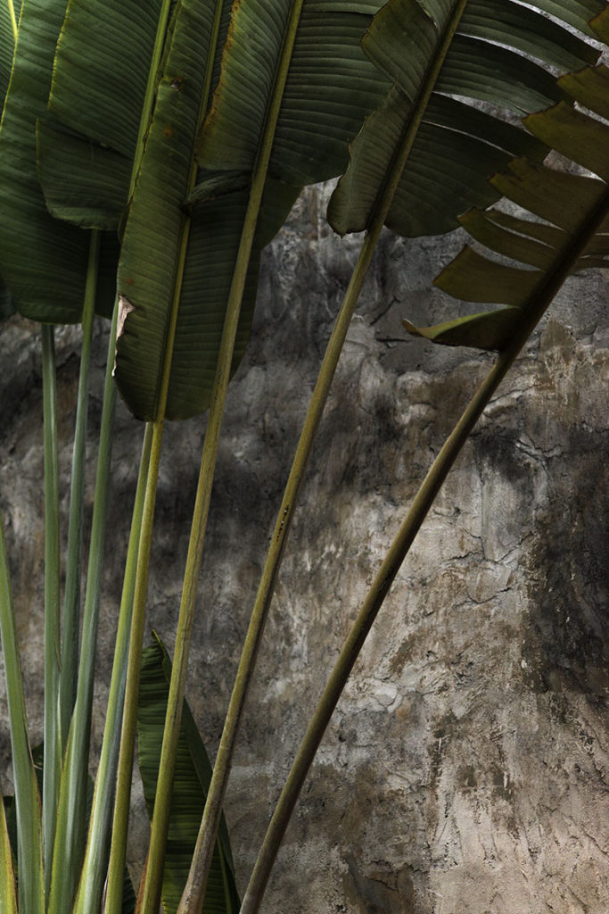 Bali Palm Trees by Greg Plachta, photograph at Craven Allen Gallery