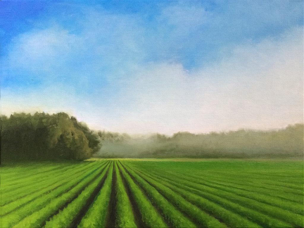 Summer Fields by David Davenport 9X12 oil onc anvas at Craven Allen Gallery  840