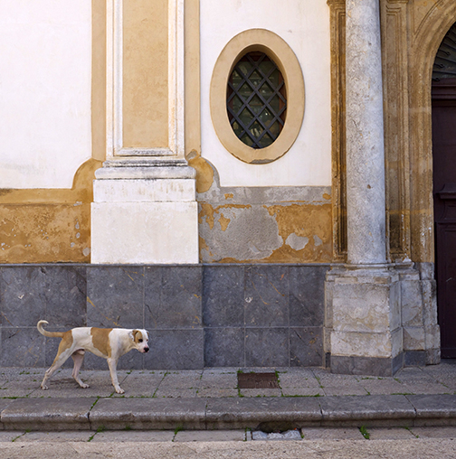 Sicily Dog by Elizabeth Matheson, photograph at Craven Allen Gallery