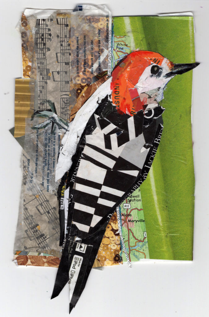 Red Bellied Woodpecker by Kathryn DeMarco, collage 11. 5 x  9. 5 framed at Craven Allen Gallery 300 SOLD