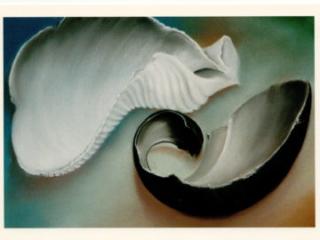 SUE SNEDDON: BROKEN AND PERFECT at Craven Allen Gallery