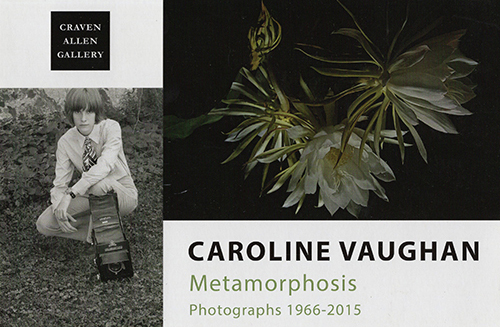 CAROLINE VAUGHAN: METAMORPHOSIS AT CRAVEN ALLEN GALLERY